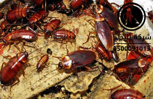 شركة تنظيف حشرات بالرياض