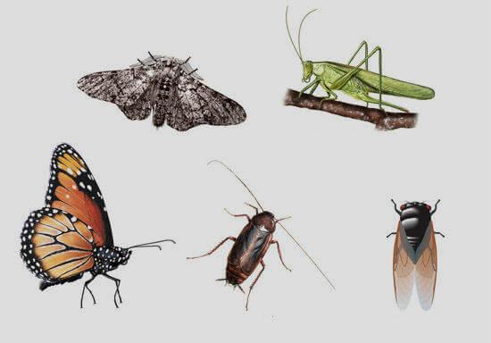 شركة مكافحة حشرات بالخرج, افضل شركة مكافحة حشرات بالخرج