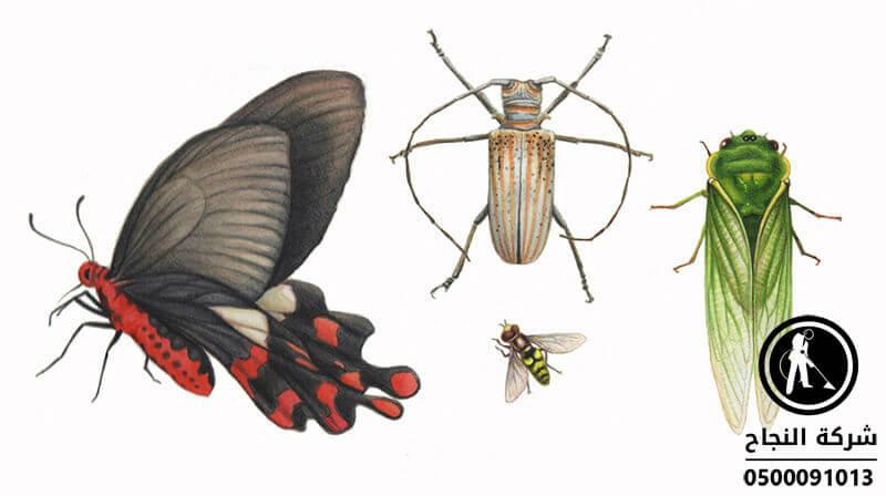 شركة مكافحة حشرات بحريملاء, مكافحة حشرات بحريملاء