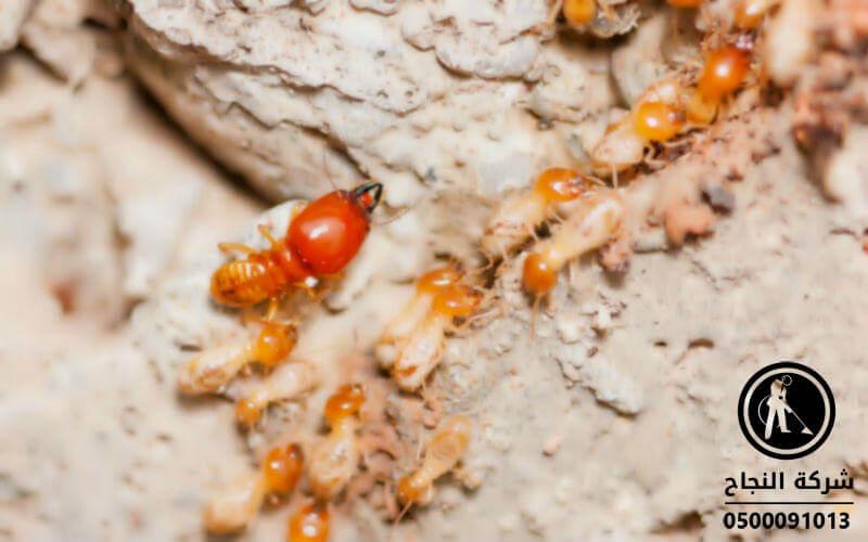 شركة مكافحة النمل الابيض بالمجمعة, شركة مكافحة النمل الابيض بالدودامى