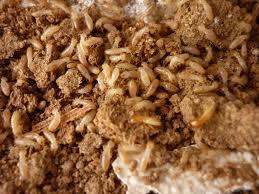 شركة مكافحة النمل الابيض بأبها, شركة مكافحة النمل الابيض بالرياض, افضل شركة مكافحة النمل الابيض بالرياض